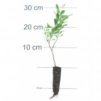 110, 15-25 cm